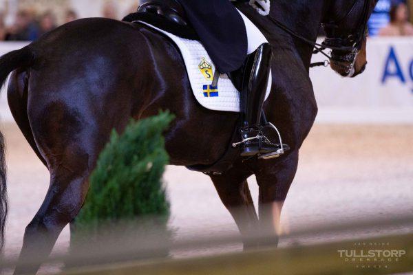 SWB horse