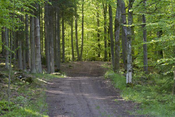 Tullstorp forest