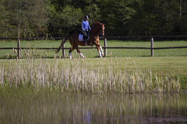 Cantering at the racing track