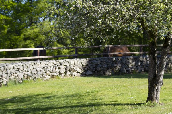 Young horses in paddock