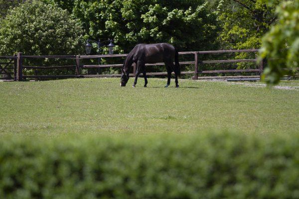 Horses in green