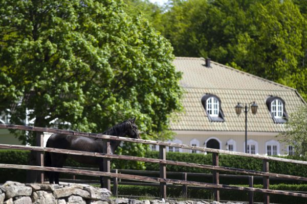 Horse view at Tullstorp